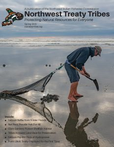 Quinault Indian Nation tribal member digs for razor clams