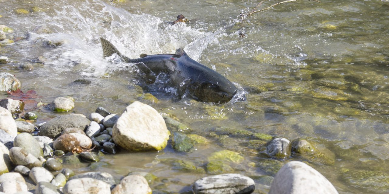 Fixing Habitat Is the Key to Salmon Recovery