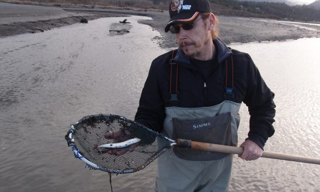 Tracking Eulachon in the Elwha River
