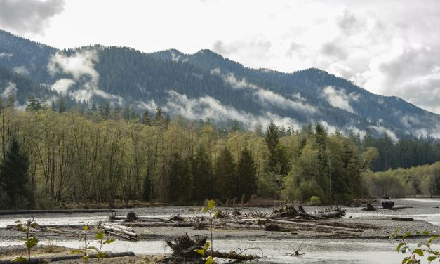 A Bold Move for Salmon Habitat