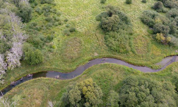 Weaver Creek Relocation Supports Salmon Habitat in Skokomish Valley