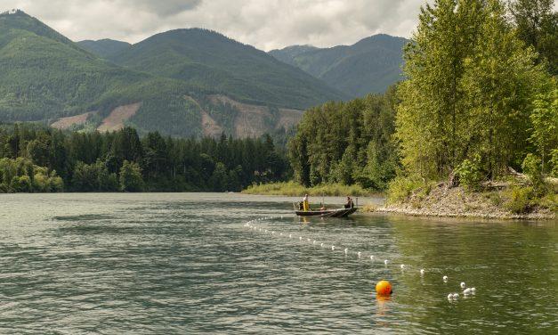 Upper Skagit Tribe Opens Brief Sockeye Fishery