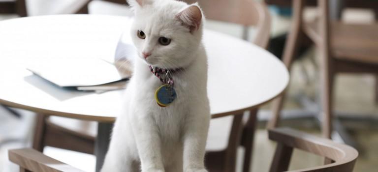 國際貓咪日特輯   走,去紐約的咖啡館擼貓去!