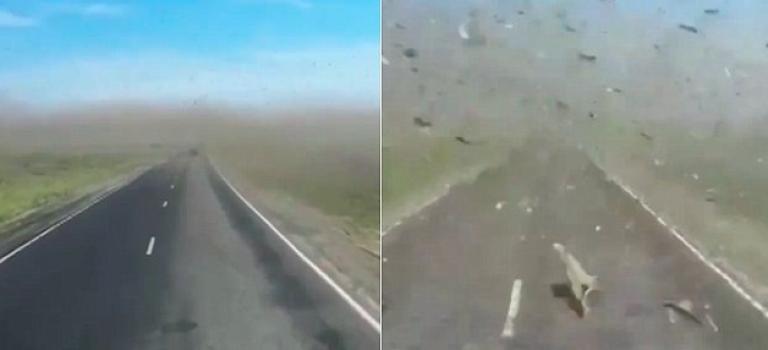 『震撼影片』這群蝗蟲追著校車跑!看了就起雞皮疙瘩!膽小勿近!