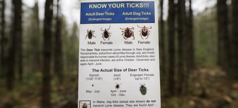 警惕再警惕!全美蜱虫危害急剧增加,夏季户外活动千万注意它!