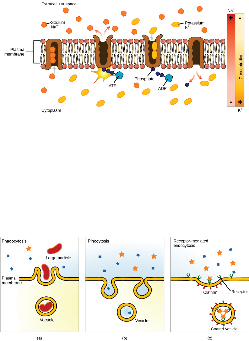 Cell Structure And Function Of A Bacterium Image By Marianaruiz Villarreal Often At The Same Time Second Substance Is Moved Out Sodium Potassium