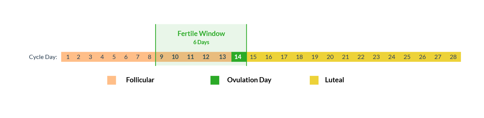 Fertile window ovulation