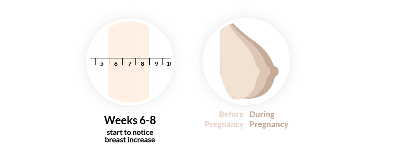 Pregnancy sign, breasts growing