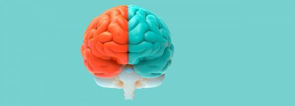 ¿Cómo funciona tu cerebro a lo largo del día?