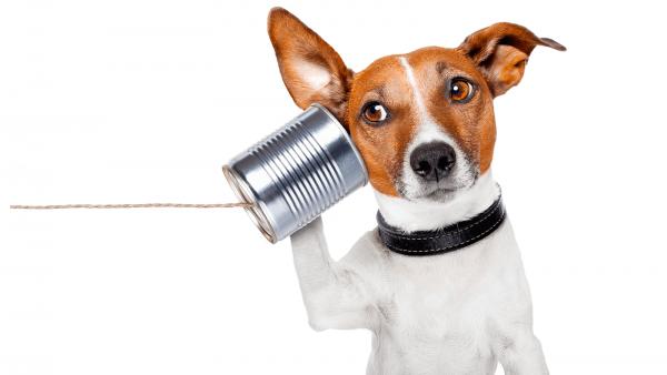 Atención a clientes vía chat: el trabajo ideal para los antisociales