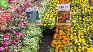 Northville Flower Sale @ Farmers Market lot