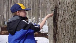 Heritage Park Maple Sugaring in Your Own Backyard @ Heritage Park