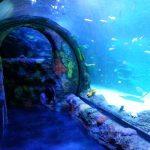 Sea Life Aquarium Great Lakes