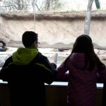 Zoo otter exhibit