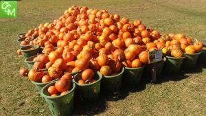Clarkston Pumpkin-ology Halloween Event @ Wint Nature Center