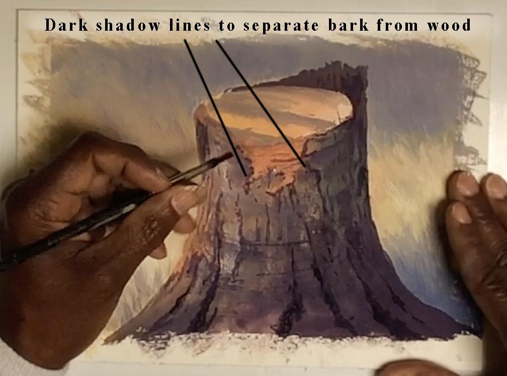 Dark shadow lines separate bark from wood.