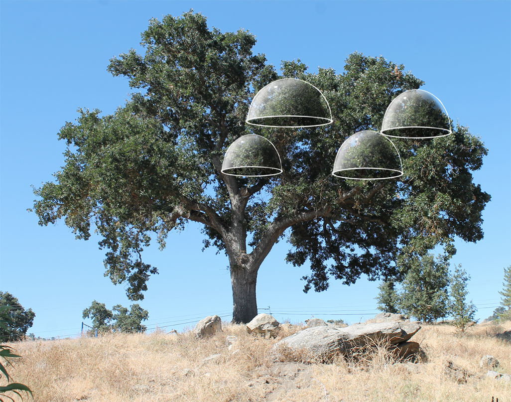 tree photo with small domes