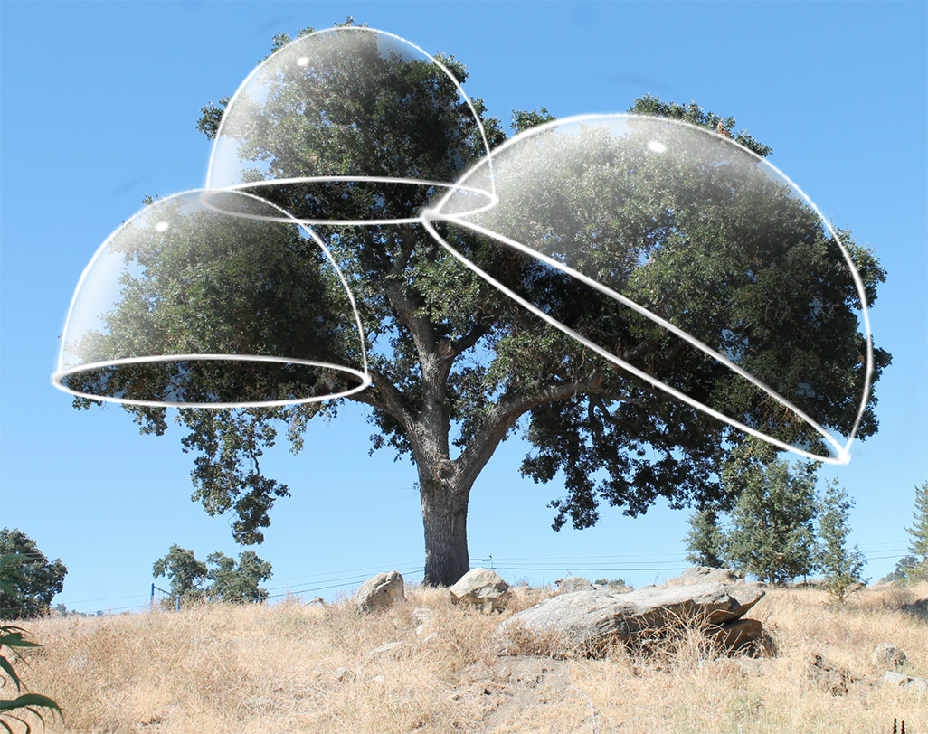 Tree photo with medium domes