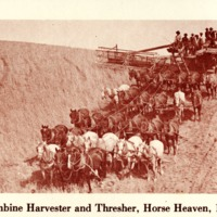 Combine Harvester and Thresher, Horse Heaven, 1910<br />