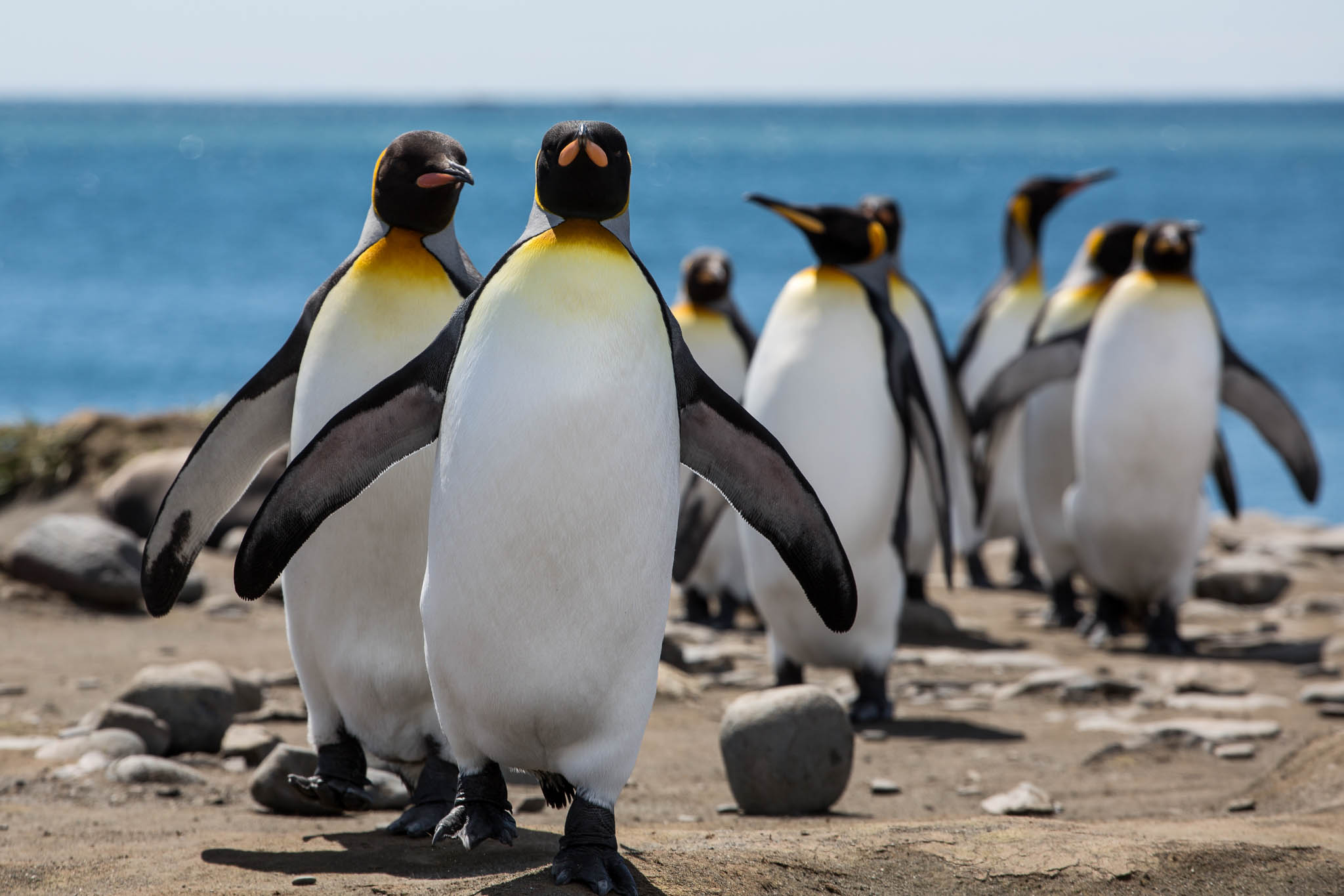 Antarctic and Arctic Wildlife Cruises | One Ocean Expeditions