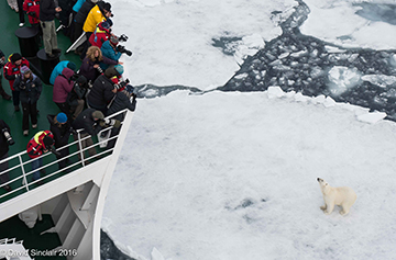 A guest takes photos of a group of frolicking penguins in Antarctica. Photo: Daisy Gilardini