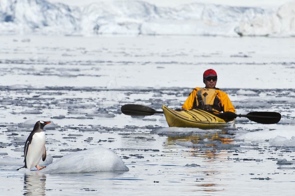 Travel to Antarctica with One Ocean Expeditions and view penguins and other wildlife from your sea kayak.