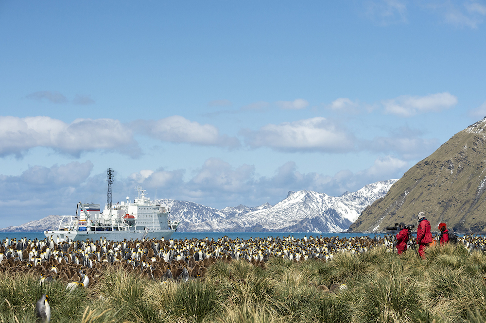 Join One Ocean Expeditions on a vacation to South Georgia, which offers spectacular wildlife encounters  with King penguins.