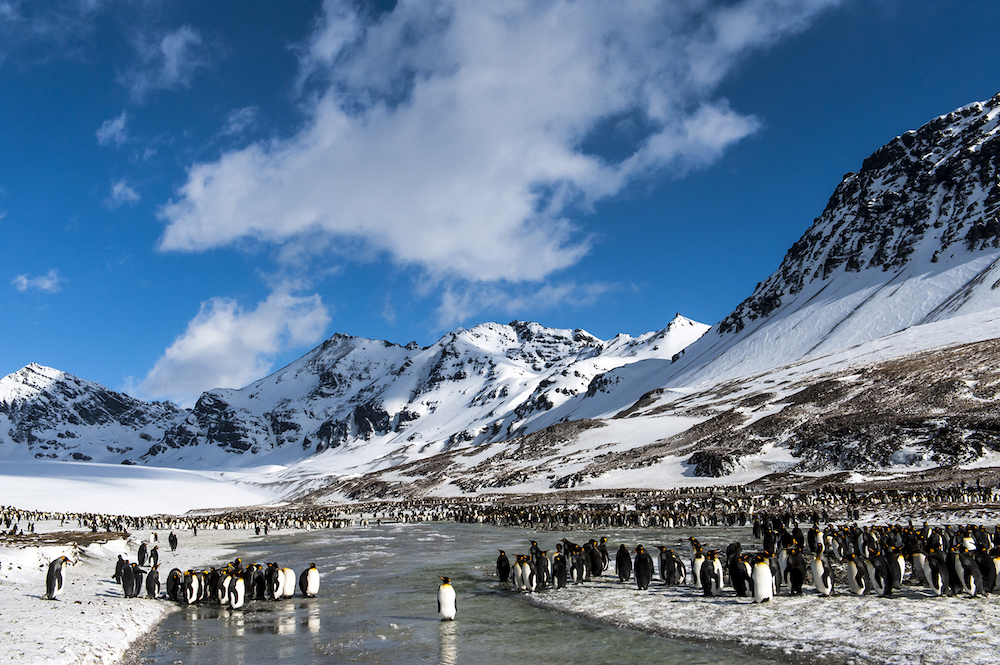 A One Ocean Expeditions cruise to South Georgia offers wildlife encounters with king penguins, Albatross, fur seals and elephant seals.
