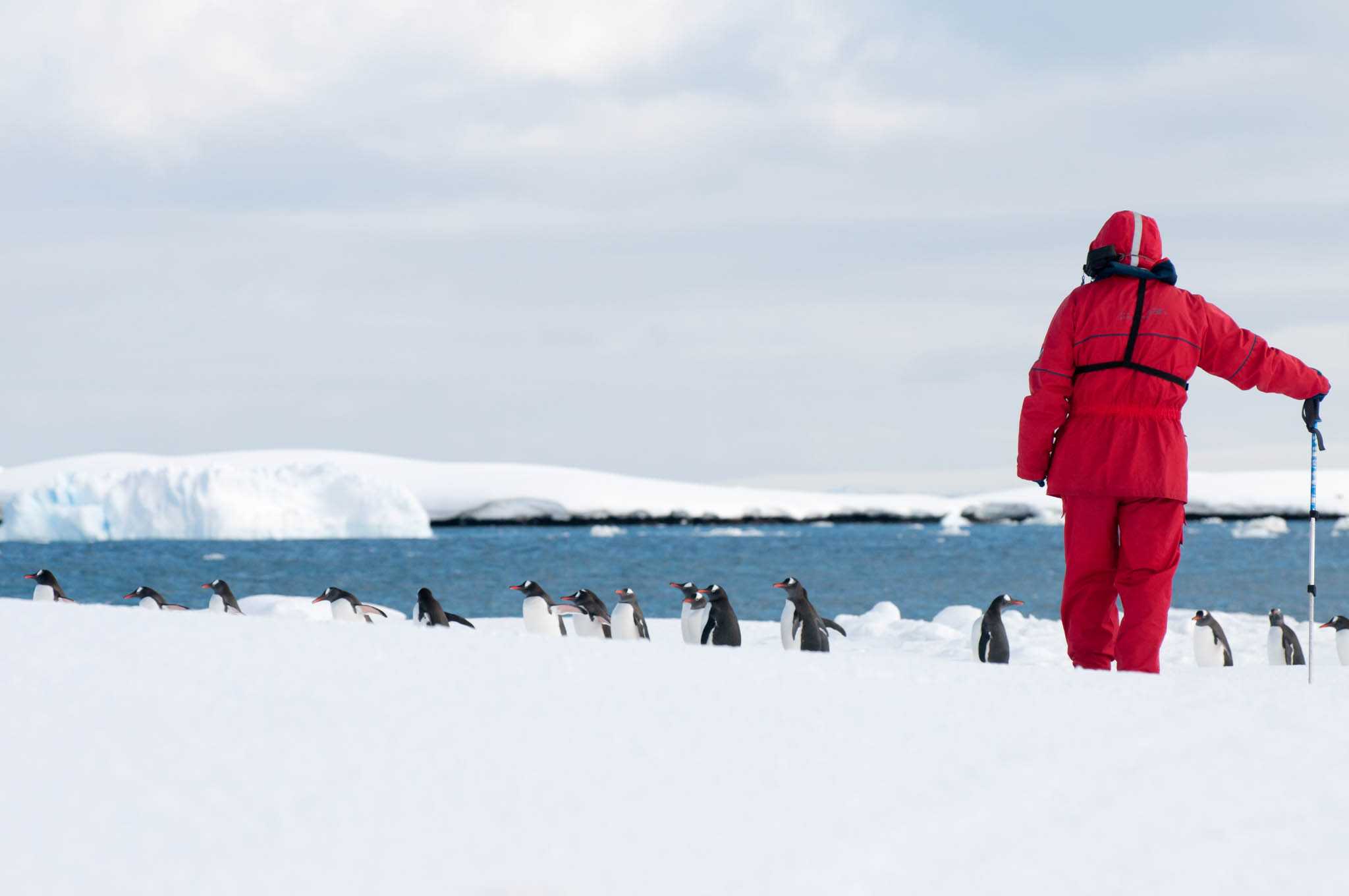 Antarctic wildlife photography, such as photographing penguins on the ice is a wonderful way to experience Antarctica. One Ocean Expeditions offers guided photography courses on many of its voyages. Image: Daisy Gilardini