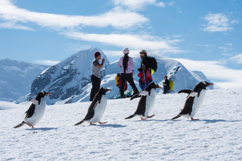 Passengers view penguins while on a snowshoeing expedition in Antarctica during a One Ocean Expeditions adventure cruise. Photo: David Sinclair