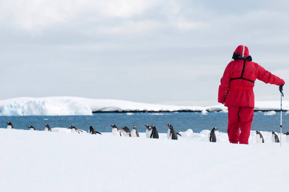 Passengers explore penguin colonies while on a snowshoeing expedition in Antarctica during a One Ocean Expeditions adventure cruise. Photo: Daisy Gilardini