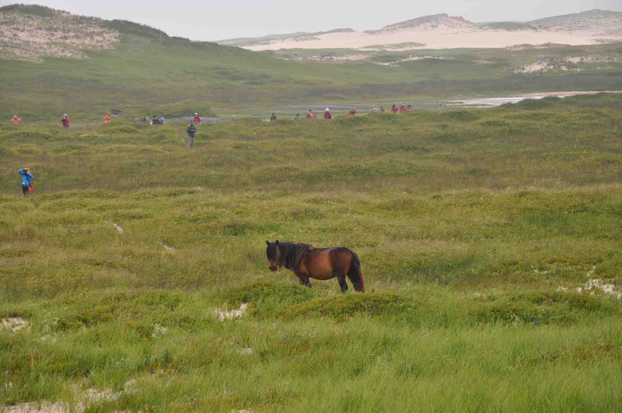 Travel on a family vacation to Sable Island and internationally renowned golf courses along Canada's East Coast with One Ocean Expeditions on small expedition cruise ships. Image: Jennifer Harnden
