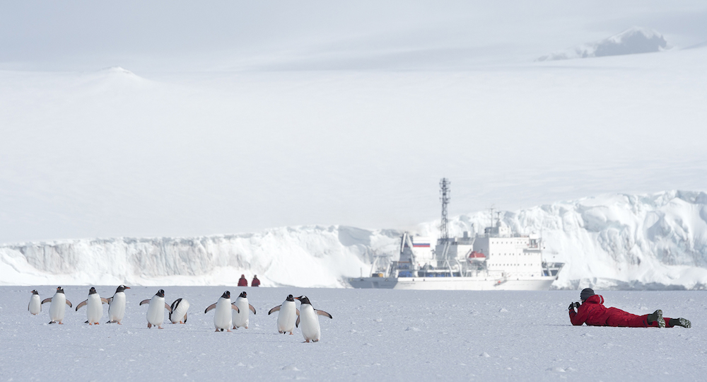 Travel to Antarctica and take wildlife photography workshops on guided hiking tours, on the ice or on your small expedition cruise ship. Image by Daisy Gilardini