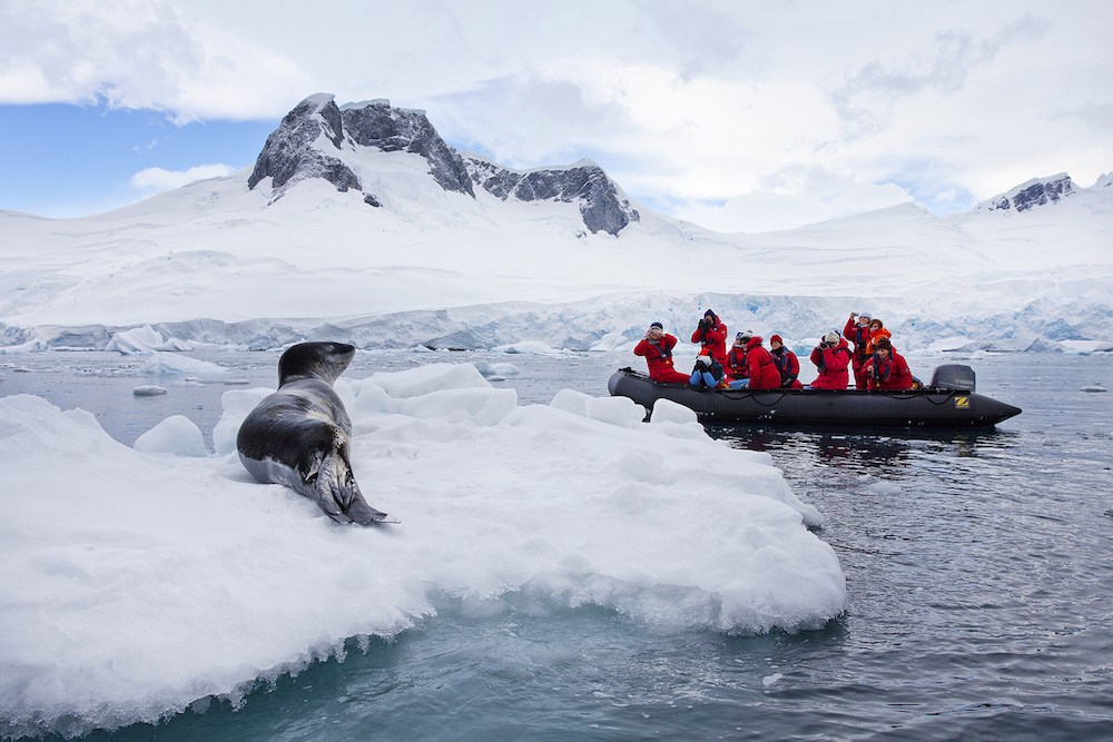 Wildlife viewing and identification are popular activities along the Antarctic Peninsula.  Take advantage of the knowledge of your expedition guides when you travel on an expedition cruise to Antarctica. Image: Ira Meyer