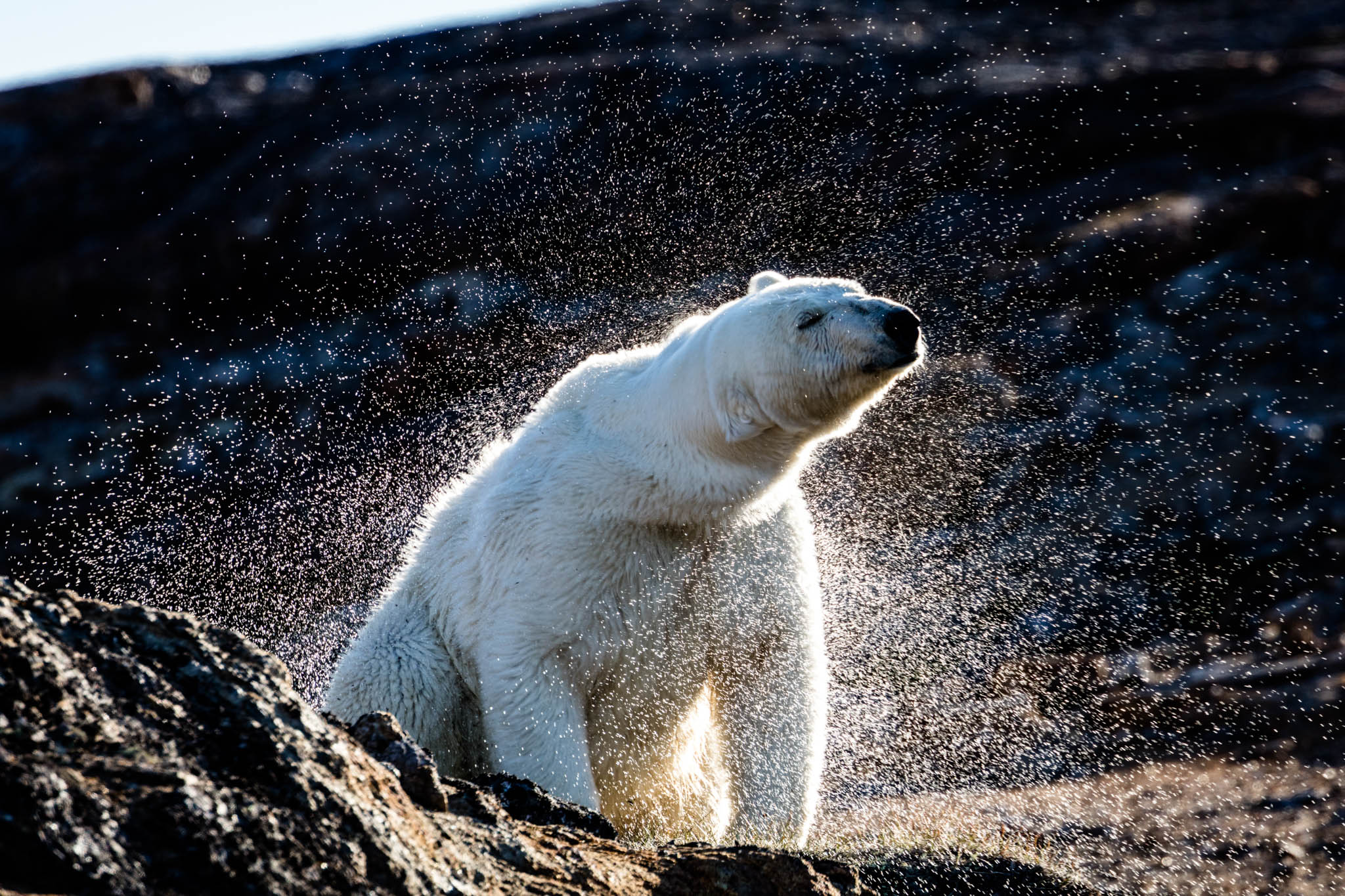 Join One Ocean Expeditions on an expedition cruise through the Northwest Passage in Canada's Arctic to see polar bears.