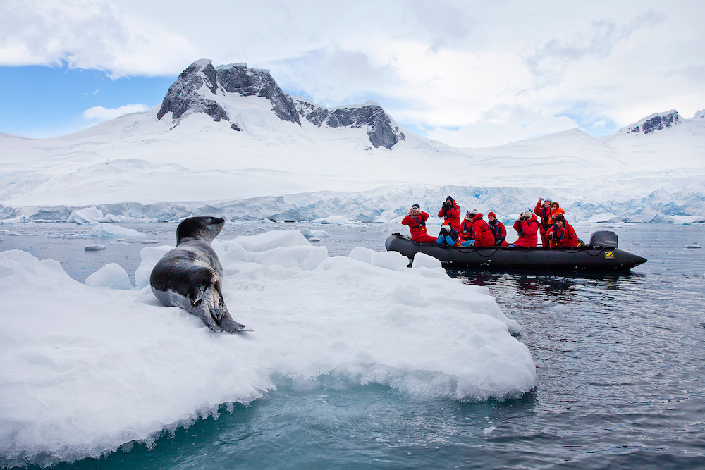 Antarctic wildlife identification on an adventure tour along the Antarctic peninsula with One Ocean Expeditions. Photo: Ira Meyer
