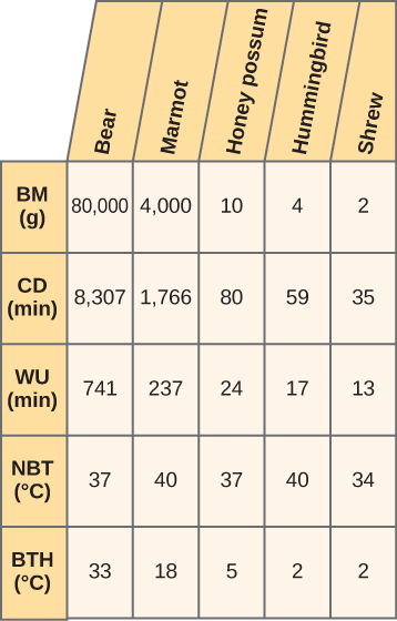 This is a 5 by 5 table. The columns are labelled BM (g), CD (min), WU (min), NBT in degrees C, and BTH in degrees C. Bears have a BM of 80,000, a CD of 8307, a WU of 741, a NBT of 37 and a BTH of 33. Marmots have a BM of 4000, a CD of 1766 a WU of 237, a NBT of 40 and a BTH of 18. Honey possums have a BM of 10, a CD of 80, a WU of 24, a NBT of 37 and a BTH of 5. Hummingbirds have a BM of 4, a CD of 59, a WU of 17, a NBT of 40 and a BTH of 2. Shrews have a BM of 2, a CD of 35, a WU of 13, a NBT of 34 and a BTH of 2.