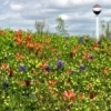 Spring wildflowers cover the dam near the water tower at Lake Eufaula.