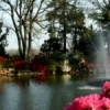 Fountains and flowers create a showcase for visitors to the annual Azalea Festival in Muskogee's Honor Heights Park.