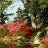 Pines and indigenous hardwoods mingle with shrubbery and colorful azalea blossoms in Honor Heights Park in Muskogee.