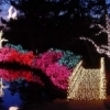 Muskogee's Honor Heights Park is adorned with brightly colored lights each December during the Garden of Lights celebration.
