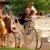 Carriage rides are available most evenings in the Bricktown Entertainment District in downtown Oklahoma City.