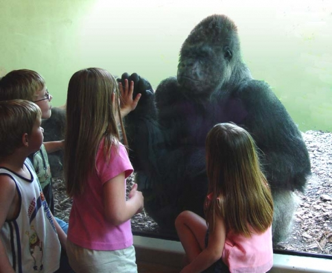 Children interact with a gorilla at the Great EscApe exhibit of the Oklahoma City Zoo.  The zoo's state-of-the-art exhibits allow animals to enjoy their natural habitats while providing plenty of great viewing opportunities for guests.