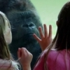 Sheer intrigue is displayed on the face of a gorilla while children stand mesmerized at the Great EscApe exhibit of the Oklahoma City Zoo.  The facility has been ranked as one of the top zoos in the nation.