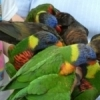 The whole family will enjoy feeding nectar to the lorikeets at the Oklahoma City Zoo.