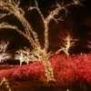 The city of Muskogee brings Honor Heights Park alive with color each December during the annual Garden of Lights celebration.  More than one million shimmering lights recreate the beauty of the park's spring azaleas during the holiday season.