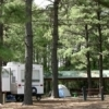 The towering pines of Cherokee Landing State Park provide shade and lend natural beauty to the campgrounds.  Cherokee Landing State Park is located in Park Hill just south of Tahlequah on Lake Tenkiller.