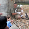 A penguin keeper talks to visitors at the Tulsa Zoo while one of his charges sits in his lap and another looks on.