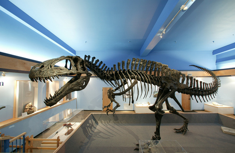A fully-articulated Acrocanthosaurus atokensis skeleton is displayed at the Museum of the Red River in Idabel.  The specimen was unearthed just 12 miles from the museum.