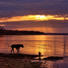 Lucky dogs enjoy an evening walk along the shore of Lake Eufaula while their owners take in a gorgeous sunset.